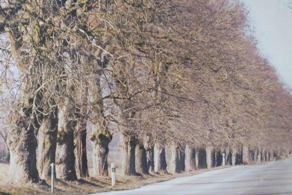 Stromoradie za obcou Čerhov, ktoré kedysi vysadil František II. Rákóczi. Má oň obavu odborníčka A. Dobrucká.