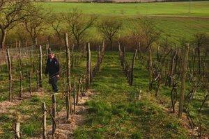 Vinica Štefana Ignáca vJablonove nad Turňou. Namáhavé práce na vinohrade prenecháva prírode.