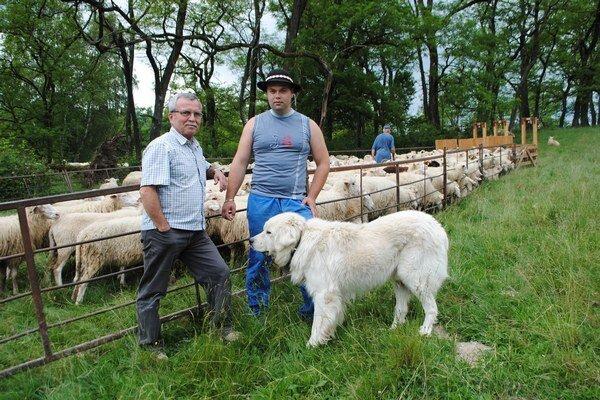 Chovu zušľachtenej valašky sa darí. Predseda družstva V. Demko (zľava) s bačom F. Malačinom.