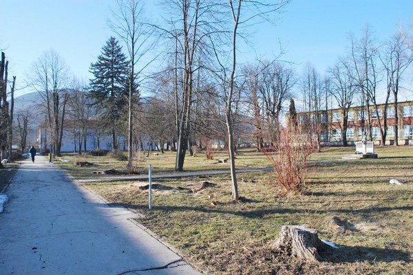 Výrub brestov v parku. Vyschnuté stromy sa mesto rozhodlo vyrúbať, nahradiť ich majú lipy.