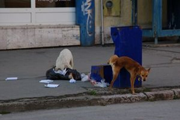 Túlavé psy. Znepríjemňujú život Rožňavčanom už dlhé roky.