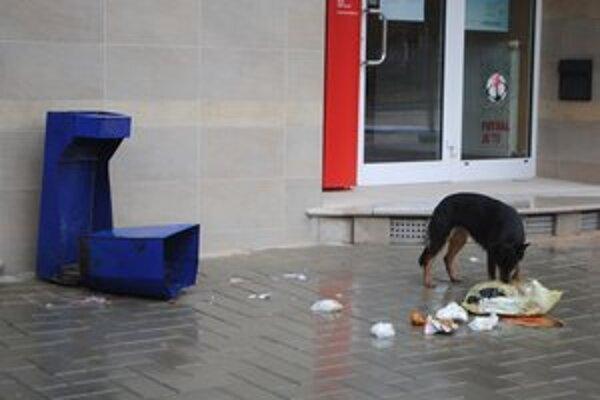 Psie hody uvidíte v centre Rožňavy aj počas dňa.
