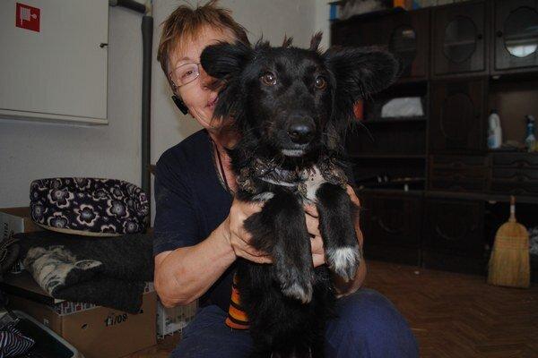 Stela je mladý a veselý pes, prejavili o ňu záujem v Česku.