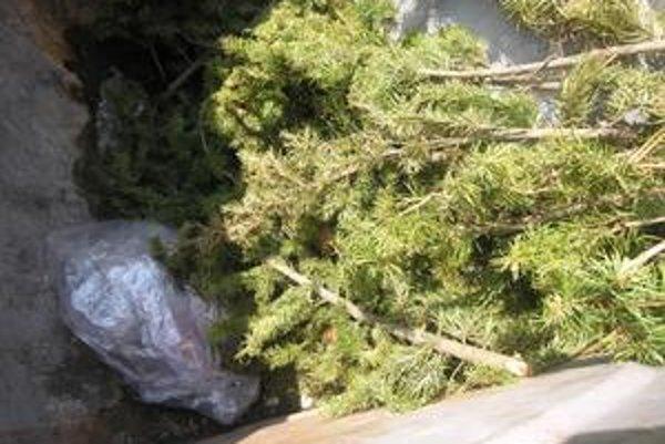 Odrezky zo stromov. Nepatria do zberných nádob s komunálnym odpadom.