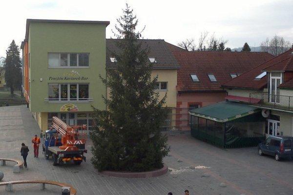 Strom chceli vyrúbať už vlani.