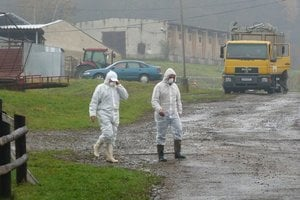 Farma v Staškovciach je pod prísnou veterinárnou kontrolou. Ďalšie šírenie nákazy na nepotvrdilo.