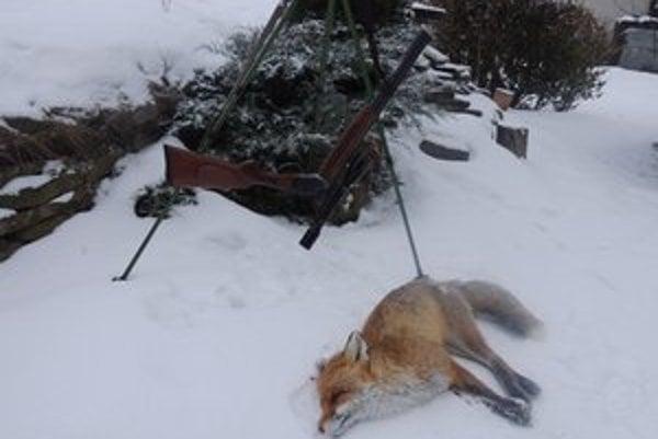 Líška. Loviť sa môže celoročne.