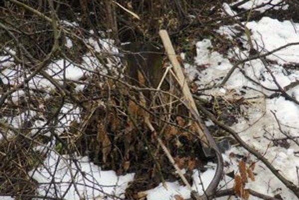 Zničené porasty. Po nelegálnych drevorubačoch ostáva spúšť. Svoje nástroje si po vyrušení zabudli na mieste činu.