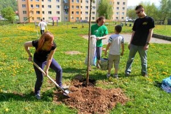 Po konzultáciách s mestom pribudla nová zeleň vďaka dobrovoľníkom na dvoch bardejovských sídliskách.