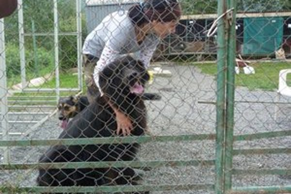 Dočasné riešenie. Svidnícki mestskí policajti už roky odchytené psy umiestňujú do dvoch kotercov v areáli technických služieb. Ak po 14 dňoch o zviera nikto neprejaví záujem, býva utratené.