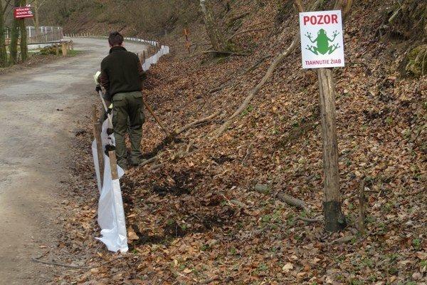 Fóliu ochranári natiahli po oboch stranách cesty.