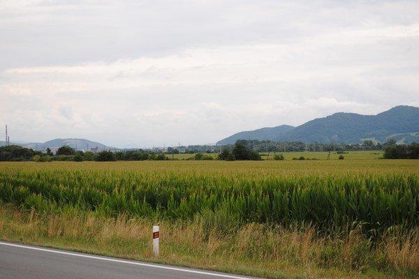Kukurica v našom regióne vytláča obilniny.