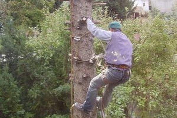 Náročná práca. Strom treba zrezávať po častiach.