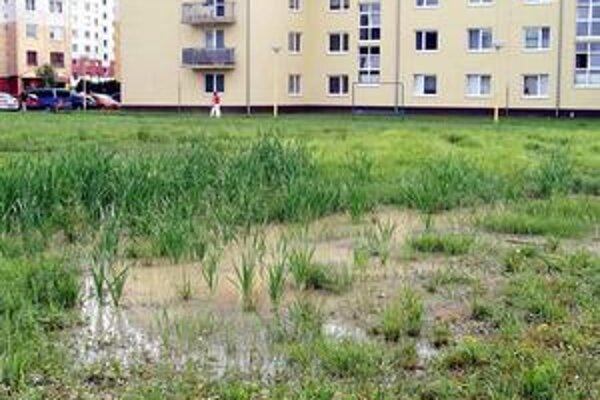 V tejto lokalite sa leto vyznačovalo kvákaním žiab, ktoré sa v močiari premnožili. Objavili sa tu aj kačky z Laborca.