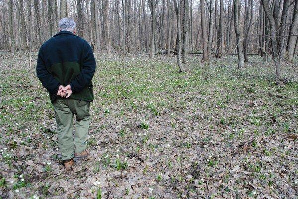 Okolie Michaloviec. Mesto vyzvalo vlastníkov pozemkov, aby zabezpečili likvidáciu inváznych druhov rastlín do konca januára.