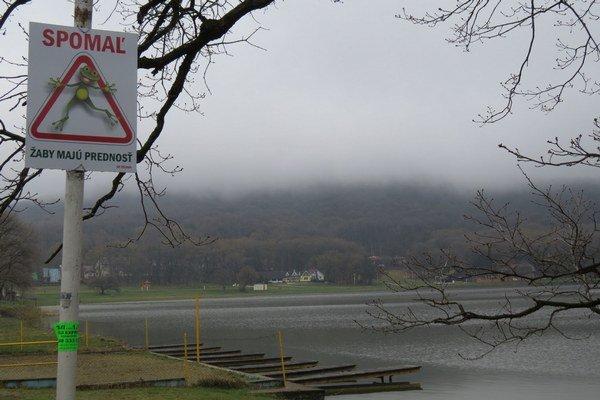 Vinianske jazero. V okolí jazera dochádza dlhodobo k najväčšiemu úhynu žiab v okresoch Michalovce a Sobrance.
