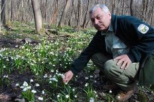 Bledule. Ich trhanie je zakázané, upozorňuje botanik Ladislav Palko.