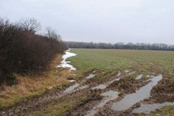 Pole pri Michalovciach. Poľnohospodári vyrúbali stromy, ktoré sa nachádzali pozdĺž polí a poľnej cesty.