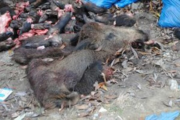 Diviačie hlavy. Neďaleko Šíravy ležalo 180 kíl zvyškov vypitvanej zveri.