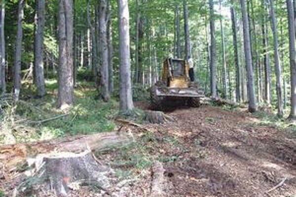 Ochranári tvrdia, že vo vzácnych lesoch sa ťaží. Lesníci oponujú, že striktne rešpektujú zonáciu.