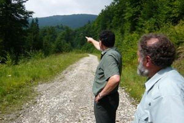 Prales je nedotknutý. Pavol Šebák ukazuje na miesto pod Jarabou skalou, kde mali podľa lesoochranárov ťažiť. Lesníci to odmietajú, kontrola im dala za pravdu.