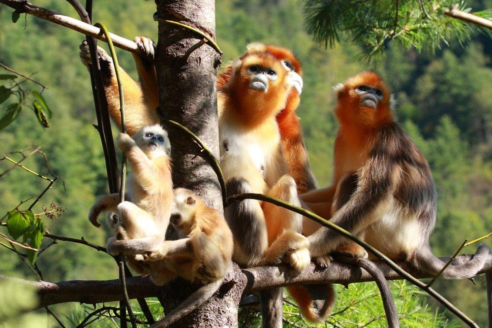Prírodná rezervácia Shennongjia, Čína