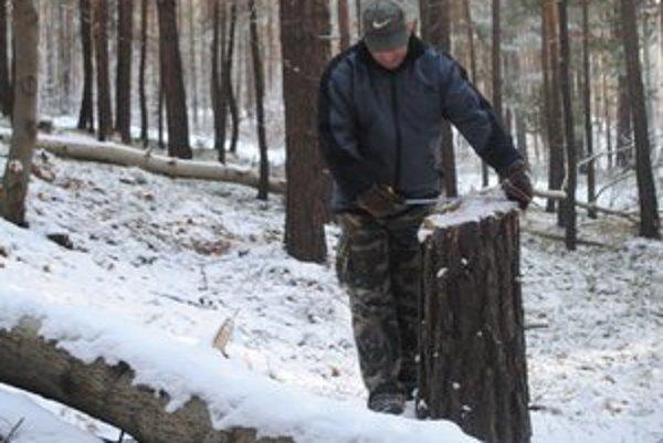 Predseda spoločenstva E. Steiner pri meraní obvodu zoťatého stromu.