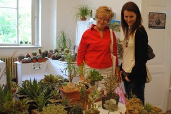 Výstava kaktusov a bonsajov. Potešilo oko každého návštevníka.