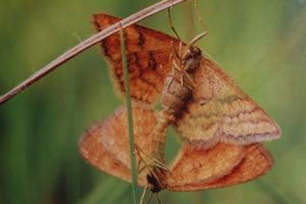 Sex v tráve. Detaily intímneho života motýľov cez fotobjektív.