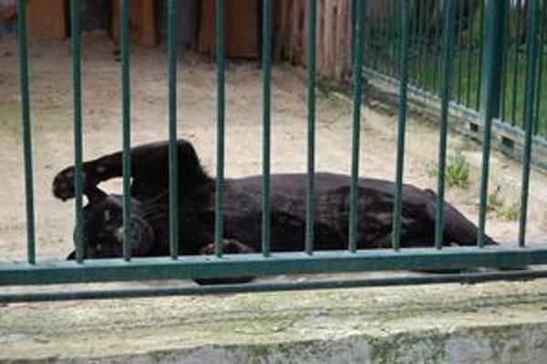 Spišskonovoveská zoo ponúka veľa zaujímavého.