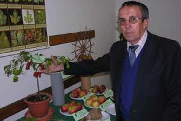 Feferónky ako ozdoby. Cyril Klinga v tomto roku vypestoval feferónky, plody mali podobu zvončekov.