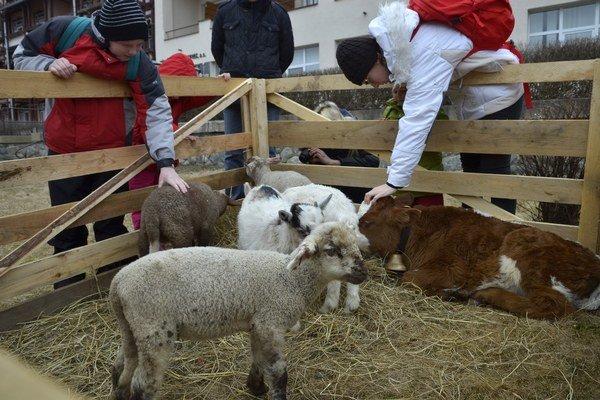 Ovce, koza a teliatko vo Veľkonočnom mestečku v Novom Smokovci.