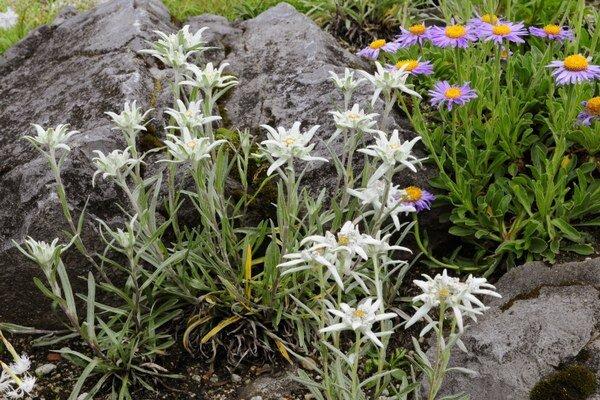 V botanickej záhrade rastú aj prísne chránené druhy.