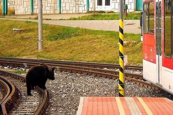 Medvede sa pohybujú v Tatrách aj na miestach, kde by ich človek len ťažko čakal.
