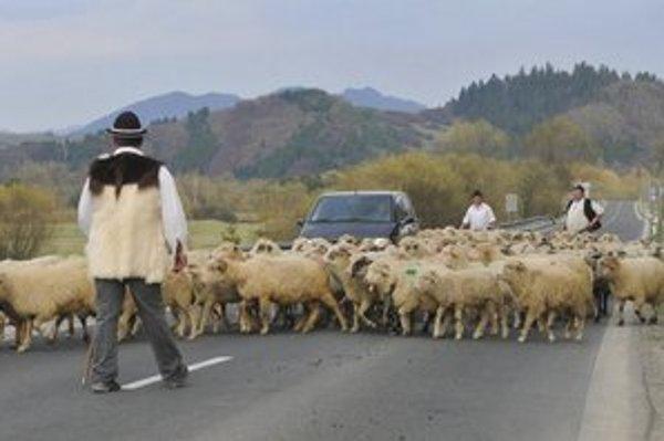 Tradičné vyháňanie oviec na pašu trochu skomplikovalo situáciu na cestách.
