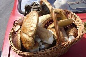 Hríby smrekové aj dubové. Hubári pod Tatrami sa konečne dočkali najobľúbenejších húb.