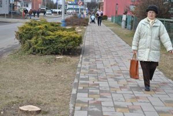 Ulica bez jaseňov. Čoskoro by mali na Štúrovej ulici namiesto vypílených stromov vysadiť mladé stromčeky s listnatou okrúhlou korunou. Rekonštruovať tu idú chodník aj cestu.