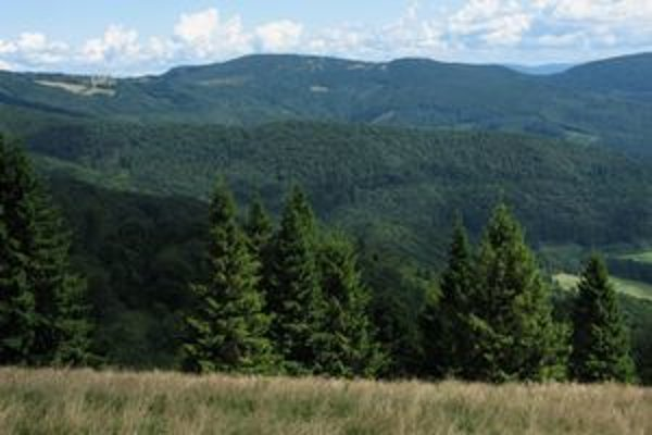 Lesy vo východnej časti bývalého obvodu Javorina sú relatívne zachovalé, značná časť územia je však úplne zničená kalamitou a ťažbou.