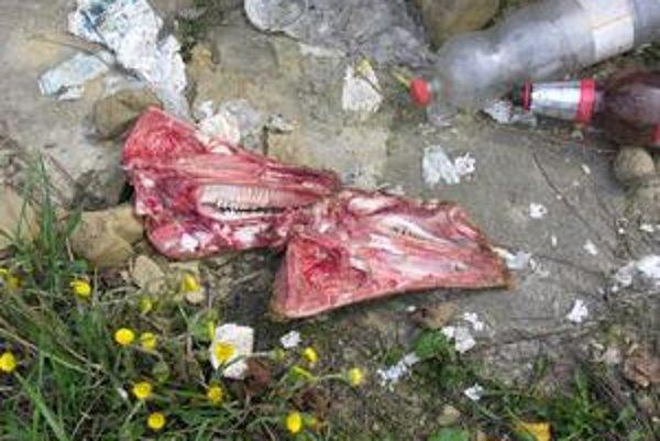 Kosti. Miestni hovoria, že kosti vyhodili Poliaci z blízkeho bitúnku.