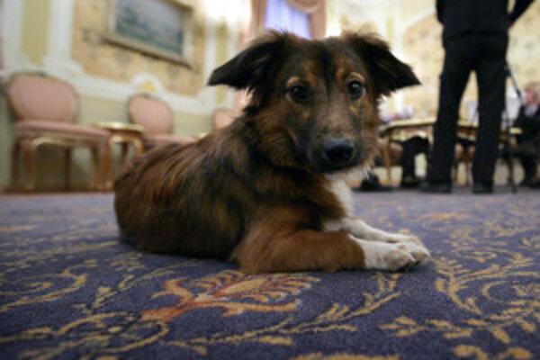 Či už žije v byte alebo na dvore, musí byť pes evidovaný na miestnom úrade.