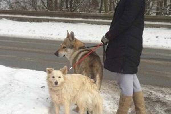 Zuzana Kačeňáková na prechádzke so svojimi miláčikmi.