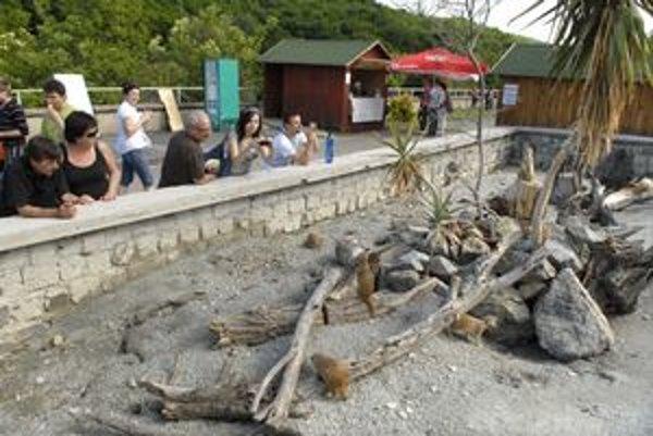 Zabavili sa. Drobunké surikaty rozveselili svojím rýchlym pohybom návštevníkov.