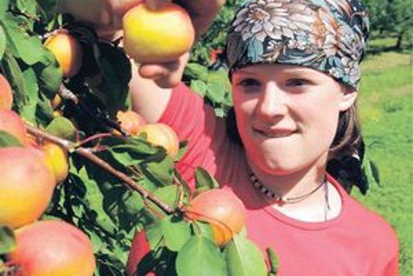 Sezónne brigády. Medzi obľúbené patrí zber ovocia.