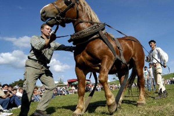 Súťaž ťažných koní bude v Morovne v sobotu 12. mája.