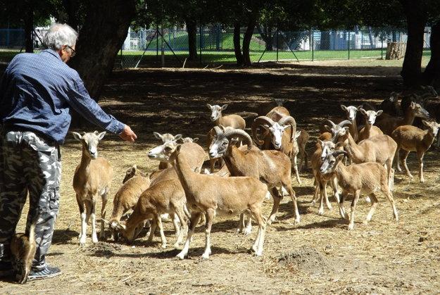 V parku sa nachádza aj obora s danielmi a muflónmi.