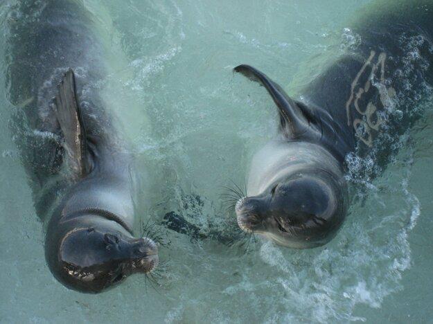V oblasti je bohatý morský život, žijú tu tulene, korytnačky, vtáky a množstvo rýb.