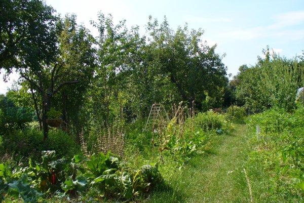 Prírodná, permakultúrna, divoká a bio.
