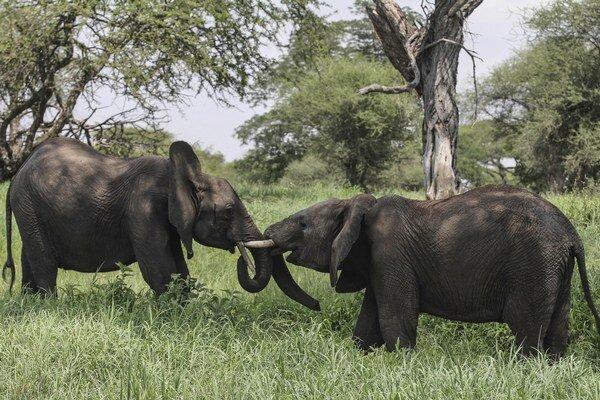 Slonov je v Tanzánii oveľa menej.
