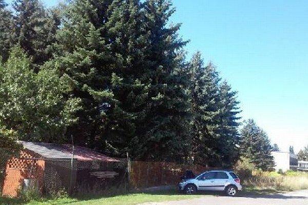 V priemyselnej zóne sa nachádza aj záhradkárska osada. Tamojším záhradkárom stromy prekážajú.