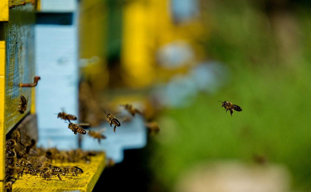 Včielky robotnice